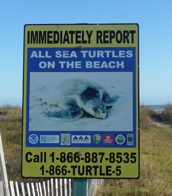 Turtle sign Galveston Is SP