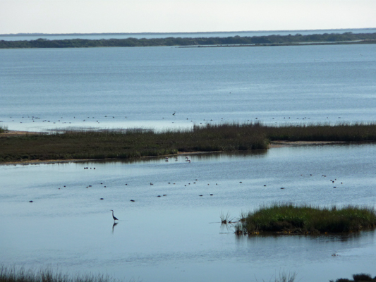 View from observation tower Aransas NWR