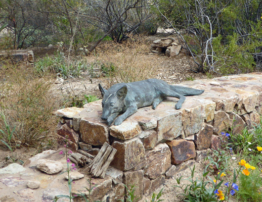 Coyote sculpture Tohono Chul