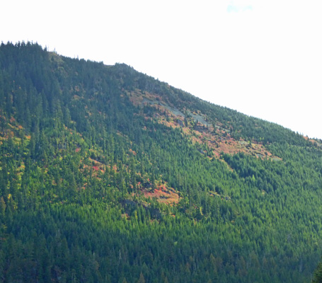 Fall color Snoqualmie Pass