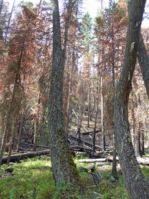 Hurricane Creek Trail burn