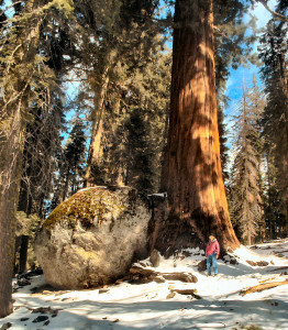 Sara and a Sequoia and a huge rock
